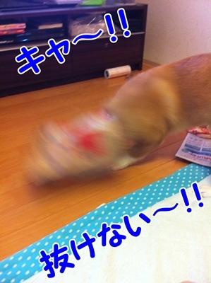 IMG_6815.JPG